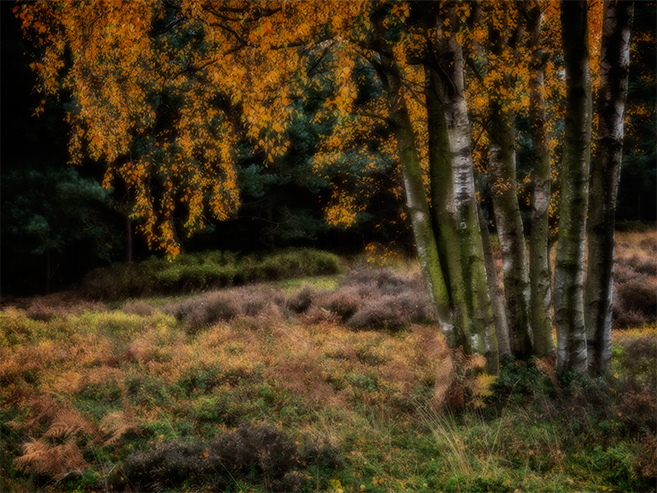 Staffordshire - October 2015